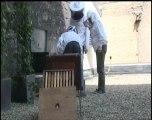 L'ouverture d'une ruche. Démonstration...