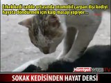 Un Chat réanime sa chatte écrasée par une voiture !