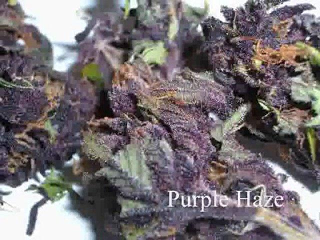 Best Buds Strains