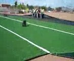 Artificial Grass,  Synthetic Turf, Arizona Luxury Lawns