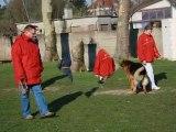blog rien que pour mes chiens