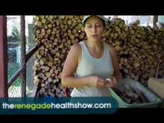 Learn How Cinnamon is Grown and Harvested #561