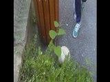foot jeune ( street, jongles, barres )
