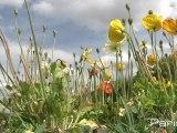 La biodiversité s'observe avec Noé conservation
