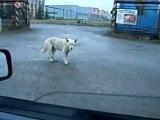 pimp my dog- il cane che balla l hip hop