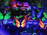 Hadra festival 2006 : Teratone vision