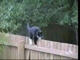 bêtisier de chats