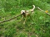 En promenade avec Droopy,aux Amis des Bêtes à  Aix les Bains