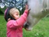 la complicité d'un cavalier  et de son cheval