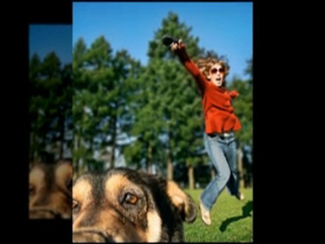Top Dog Training Collars Video