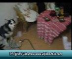 Köpek Ev Eğitimi