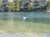 Aramis au lac d'Esparron_01