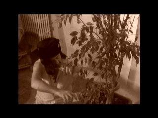 La Pastille Morin : La vraie Palme d'Or 2010