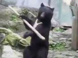 Kung Fu Bear - Kung Fu Ours - Kung Fu Orso