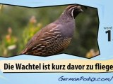 Learn German-Learn with German birds 2 video