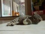 Rencontre avec les chatons aux Amis des Bêtes  Aix les Bains