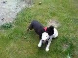 tyson mon chien et tyson le chien de ma cousine