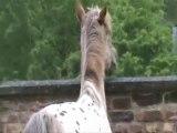 Nouvelle vie, une vie de cheval...