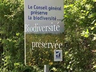 La biodiversité sur les bords des routes en Indre-36