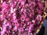 """Cueillette de la """"rose de Damas"""", une des plus anciennes au monde"""