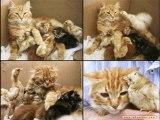 Pour toutes celles et tous ceux qui aiment les chats
