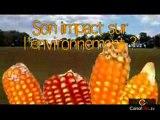 OGM Monsanto 810 et impacts sanitaires