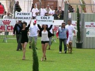 Colt au Paradis d'Orsy, finale Ring 2010 Mauguio