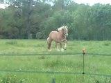 qui a dit que les chevaux n'aimaient pas les écuries lol