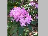 Photo Editing Basics Part 2 - Using the Cropping Tool