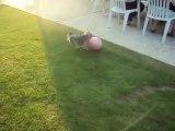 Sam et son ballon