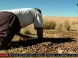 Sequía afecta severamente agricultura del Altiplano bolivia