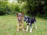 Eclair et Shaïna du refuge des Amis des Bêtes Aix les Bains