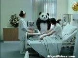 Il panda irascibile colpisce ancora
