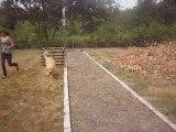 mon chien saute 1m10 et d'autre saut