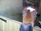 video les chevaux et poulains