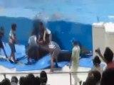 Delfino tenta la fuga dall'acquario