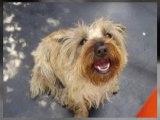 Anastasia's Canine Grooming | Dog Grooming