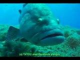 Aqualonde Plongée Le mérou avec TATOU