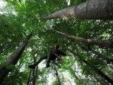 passage darbre en arbre