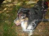 Mon chien Bouba