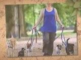 Start a Dog Walking Business, learn secrets to dog walking