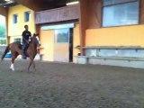 queen martin sauts, jument PP SF 6 ans, 1m73