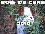 BOIS DE CENE 2010 - LES DERAILLES