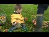 2005 (octobre) la récolte des pommes