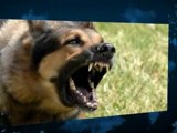 Dog Whistle to Stop Barking Best Silent Dog Whistle - High