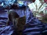 Chat rapporte sa balle comme un chien