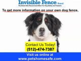 Invisible fence collar Austin