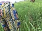 Togo: des agriculteurs encouragés à cultiver du riz africain