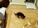 Quart d'heure de folie des chatons