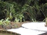 Bassin de jardin 2 par ACCES JARDINS